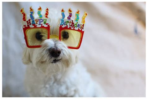 Top 10+ Happy Birthday Dog Images for Animal Lovers